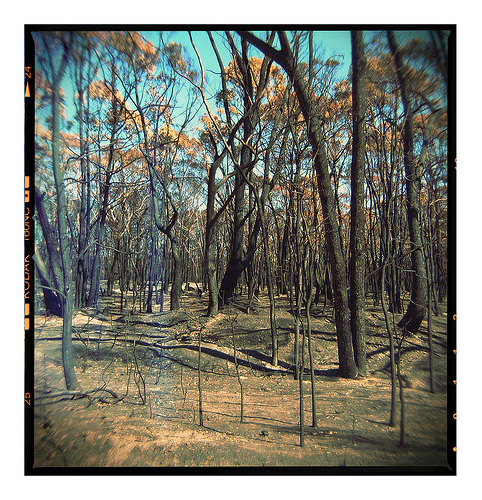 Aftermath of bush fire, Oz 2006