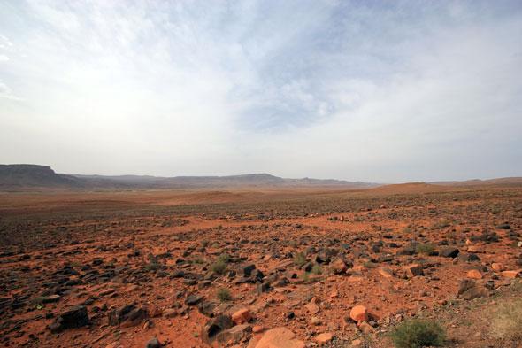 Desert Safari 01