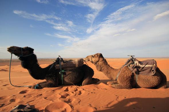 Sahara Camel Ride 03