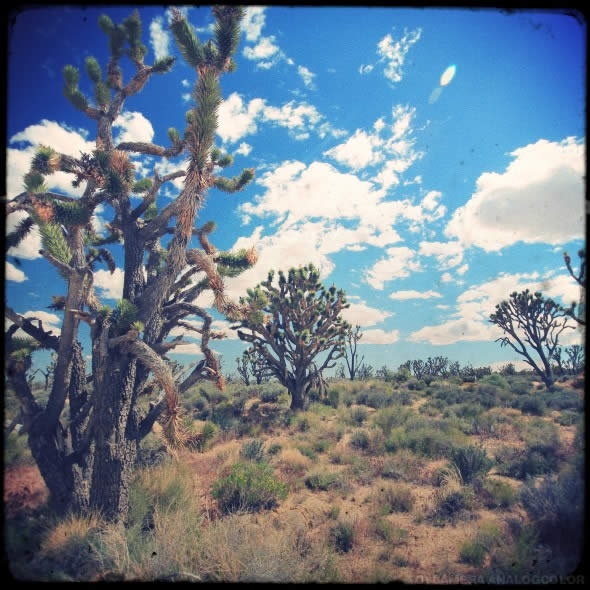 Mojave 5