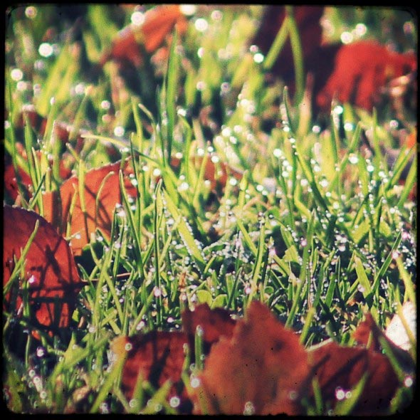 Dew on the grass 1