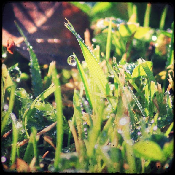 Dew on the grass 2