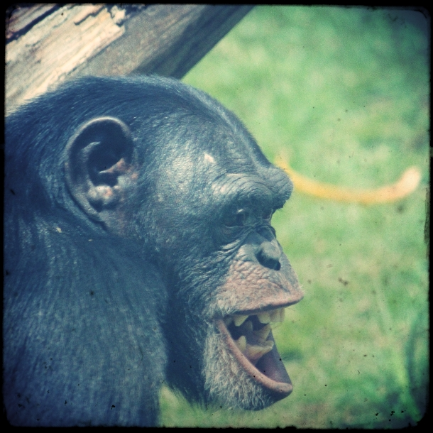 sao_paulo_zoo_5