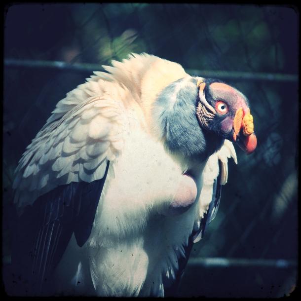 sao_paulo_zoo_7
