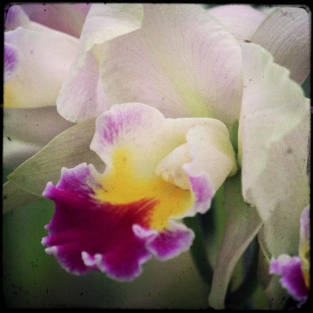 rio-botanical-gardens-flowers-10