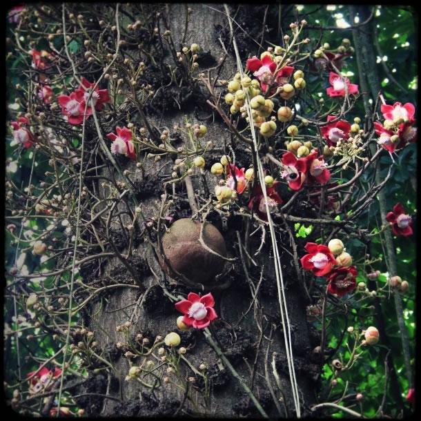 rio-botanical-gardens-flowers-2