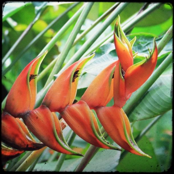 rio-botanical-gardens-flowers-3