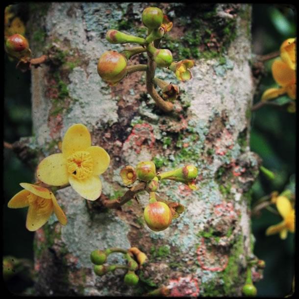 rio-botanical-gardens-flowers-4