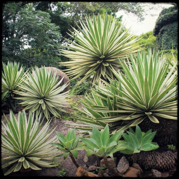 rio-botanical-gardens-flowers-5
