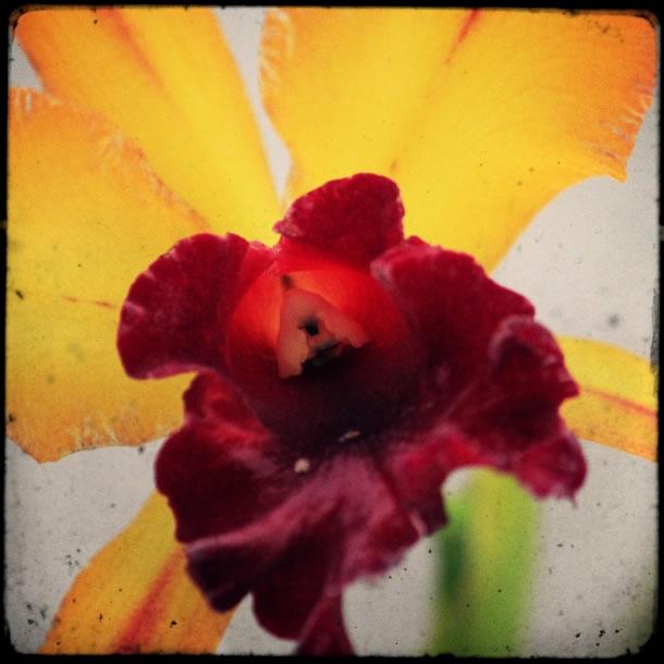 rio-botanical-gardens-flowers-8