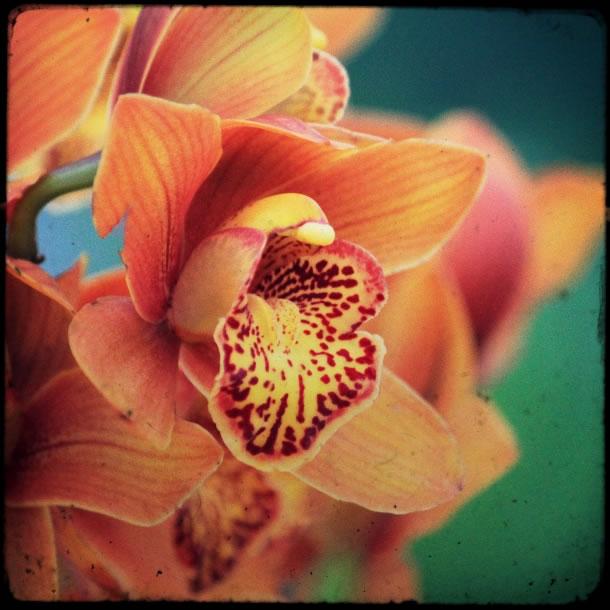 rio-botanical-gardens-flowers-9
