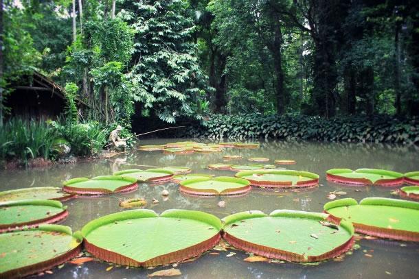 rio-de-janeiro-botanical-gardens-3