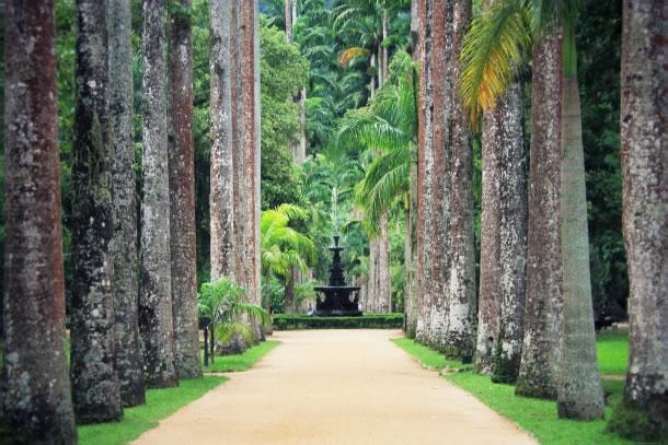 rio-de-janeiro-botanical-gardens-4