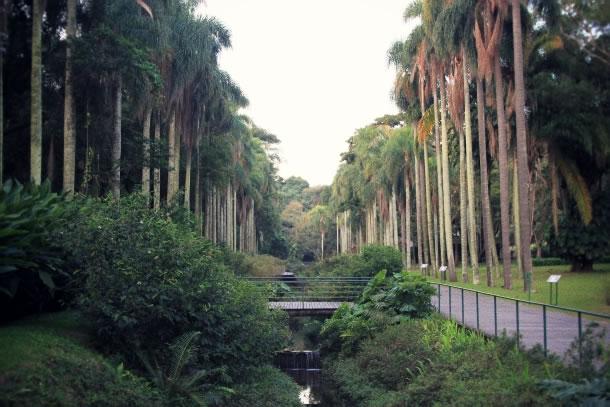 sao-paulo-botanical-gardens-1