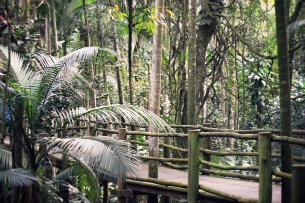 sao-paulo-botanical-gardens-8