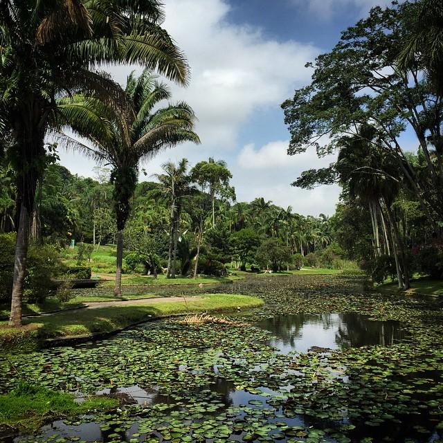 Relaxing afternoon at São Paulo Jardim Botanico.