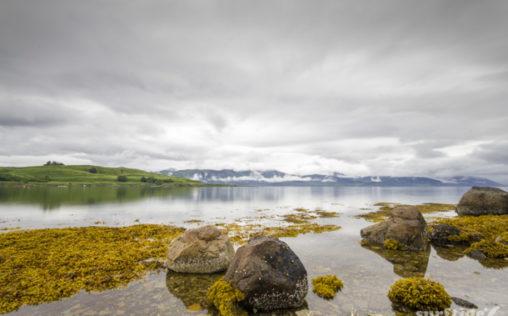 Loch Linnhe rock pools