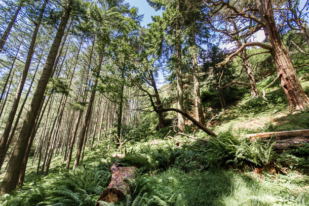 Trossachs woodland trail