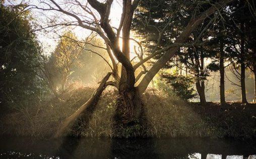 Backlit tree over the river stort