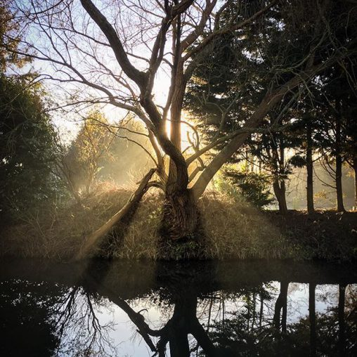 Backlit tree over the river stort