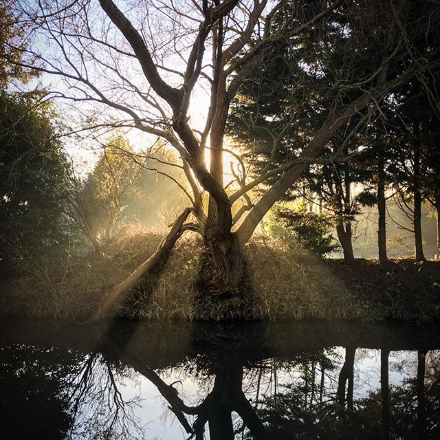Tree of Light, River Stort, UKAnother iPhone snap whilst out on another winter's run yesterday. Sun beaming in behind a tree on the river bank of the Stort. Hertfordshire, UK.#bishopsstortford, #hertfordshire, #iphone6s, #landscape, #light, #lightroom, #mist, #reflection, #riverstort, #sunlight, #sunset, #walk, #water, #winter