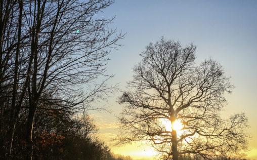 Stortford to Hallingbury winters walk