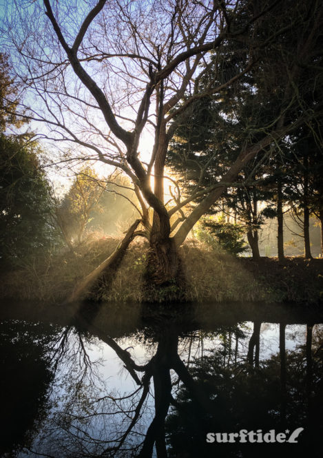 Light passing through the branches of a tree on the river bank of the River Stort, near Bishops Stortford in Hertfordshire