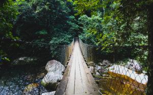 Rope bridge across river on Ilhabela, Brazil